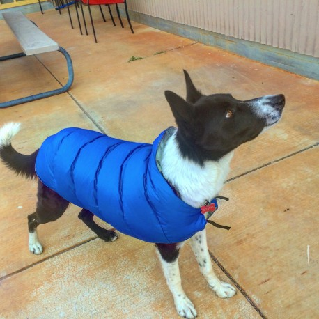 Trail Dog Parka