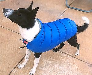 dogcoat1_1.png